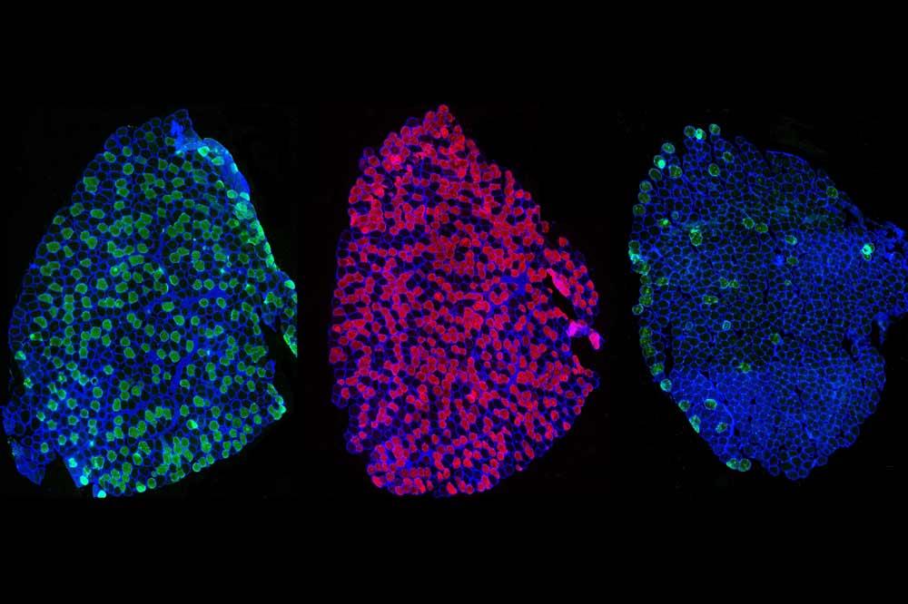 Bild AG Zellmorphologie